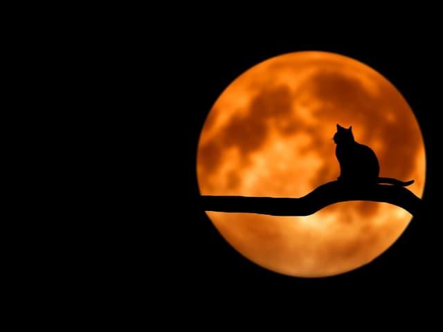 as fases da lua e suas influencias