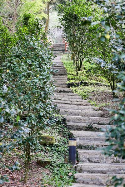 台中新社桃李河畔黃楓白雪木步道好浪漫,白色城堡隱藏在森林中