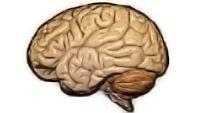 cognitive harm