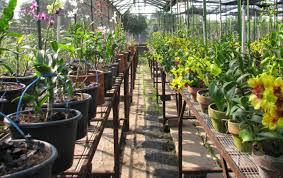 Peluang Bisnis Tanaman Bunga Hias Dan Analisa Usahanya