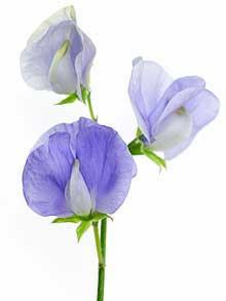The Enchanted Petal: 365 Days of Floral Education - Days ...