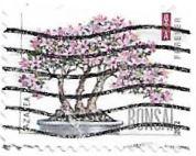 Selo Bonsai de Azaleia