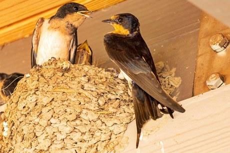 Kegunaan sarang burung walet