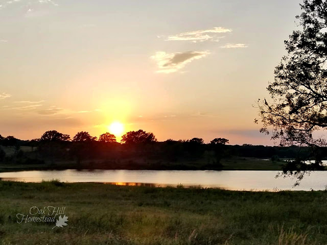 Sunset behind the pond