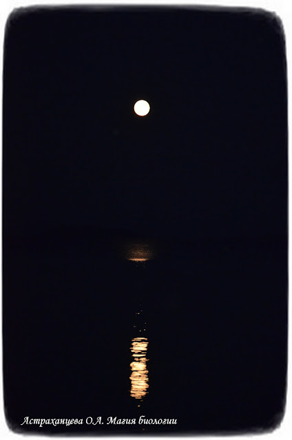 полнолуние, лунная дорожка