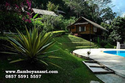 Jasa Tukang Taman Surabaya Tanaman Hias agave siklok