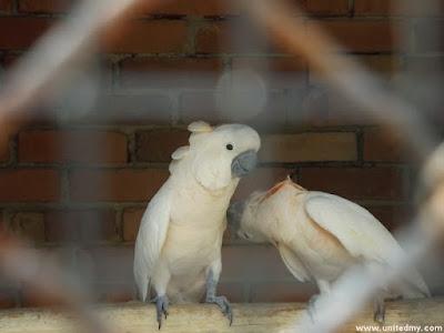 Kakatua Penang Bird Park