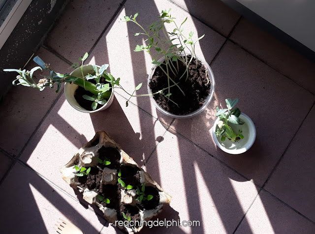 seedling, reaching delphi