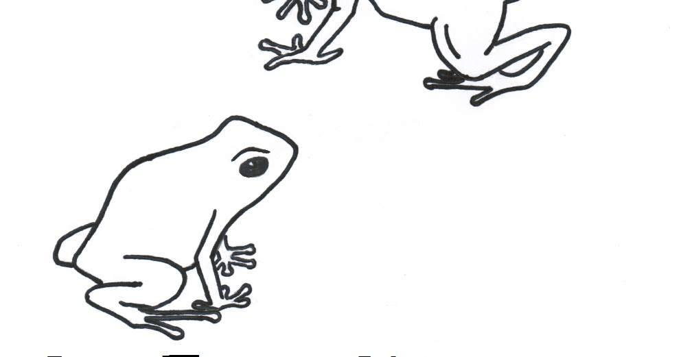 Poison Dart Frog Coloring Pages Sketch Coloring Page