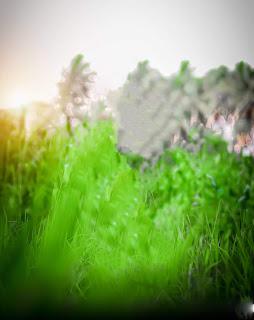 Best Green Blur CB Background Free Stock
