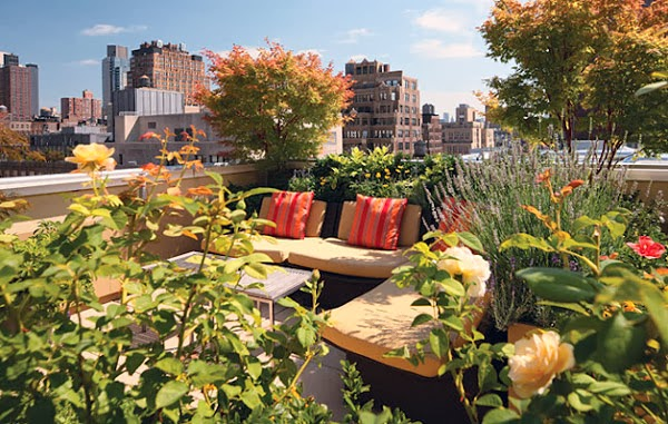 Garden Design Ideas: Roof Garden: Go Green with Hydrological Benefits