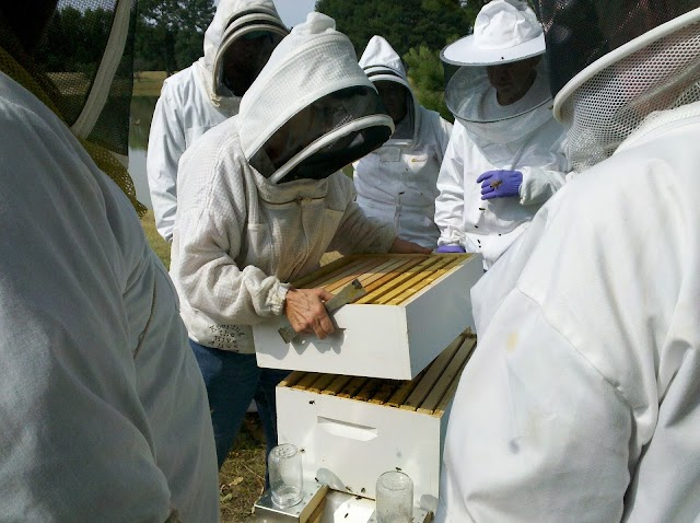 How To Inspect Your Bee Hive: Step By Step Guide
