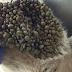 ΕΠΕΙΓΟΥΣΑ ΑΝΑΓΚΗ - Αναζητείται αιμοδότης σκύλος για να σωθεί το αδέσποτο - Βρέθηκε με εκατοντάδες τσιμπούρια στην Εύβοια - ΒΟΗΘΗΣΤΕ
