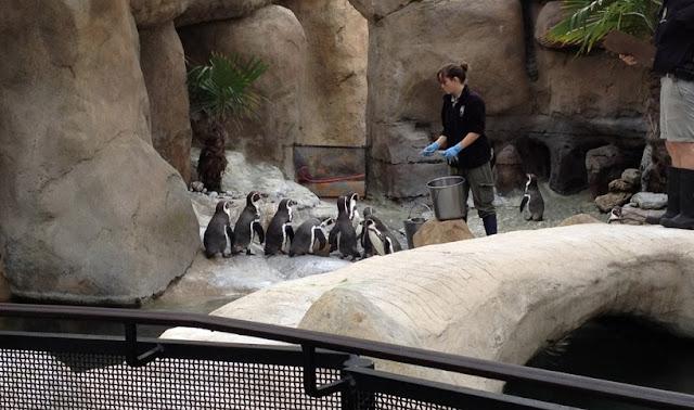 O que fazer no Santa Bárbara Zoo