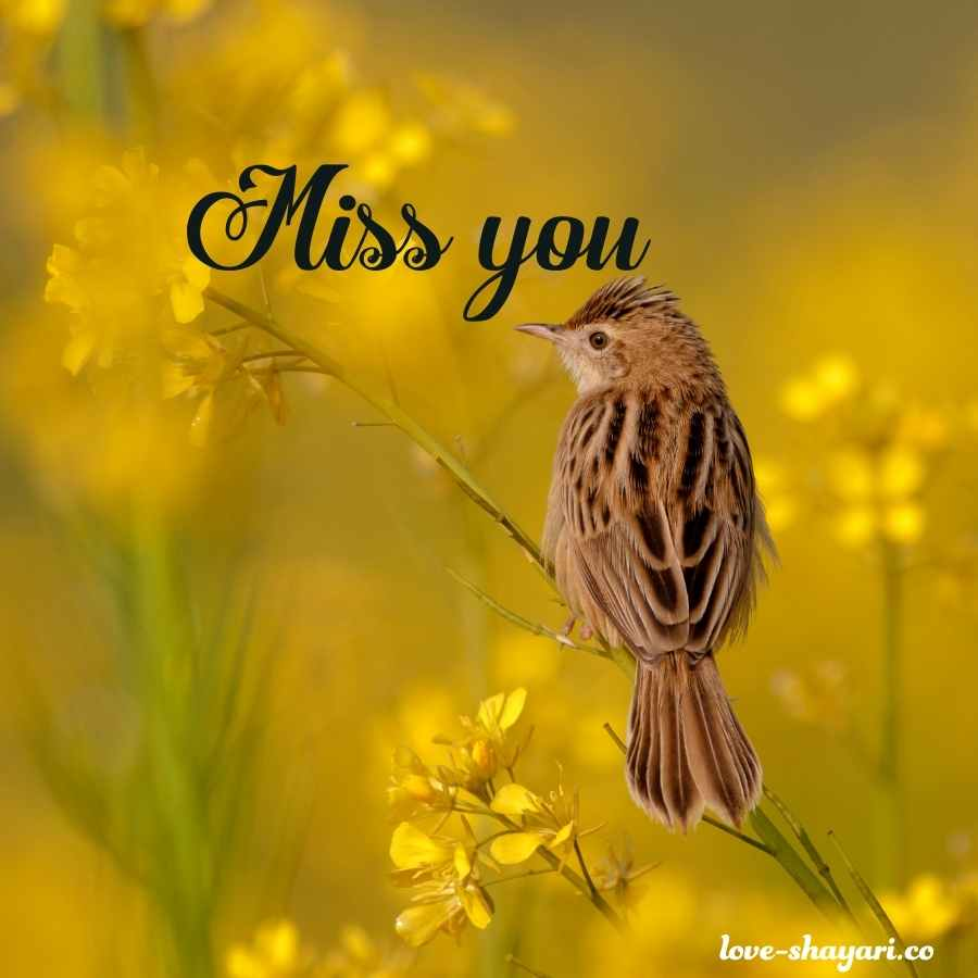 miss you images for lover