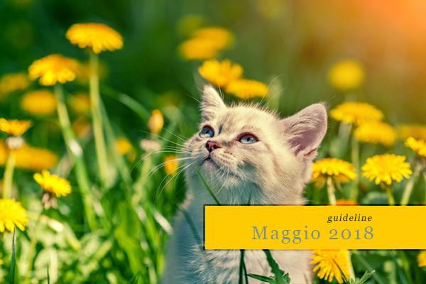 Guideline: Maggio 2018