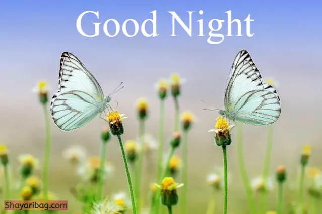 Good Night Flowers and Butterfly