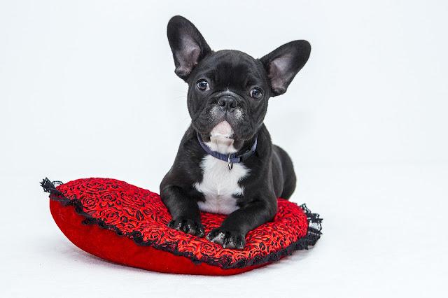 10 Erros Comuns Que Encurtam A Vida Dos Nossos Pets