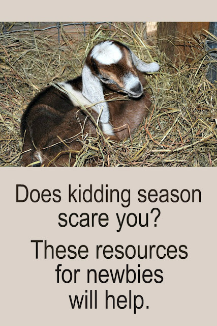 If kidding season scares you, these resources will give you confidence and help you be a prepared goat owner.
