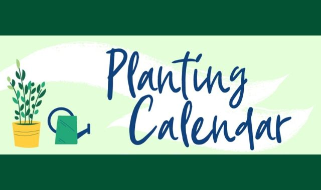 Gardening: When and What to Plant