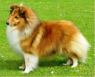 bonito cão