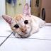 Tips Tinggalkan Kucing Di Rumah Bila Balik Beraya