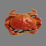 crab in spanish