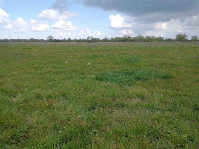 North Meadow, Cricklade