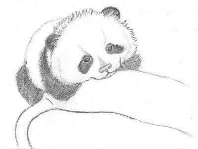 LA LAPICERA DE SANDRA Cmo dibujar un oso panda