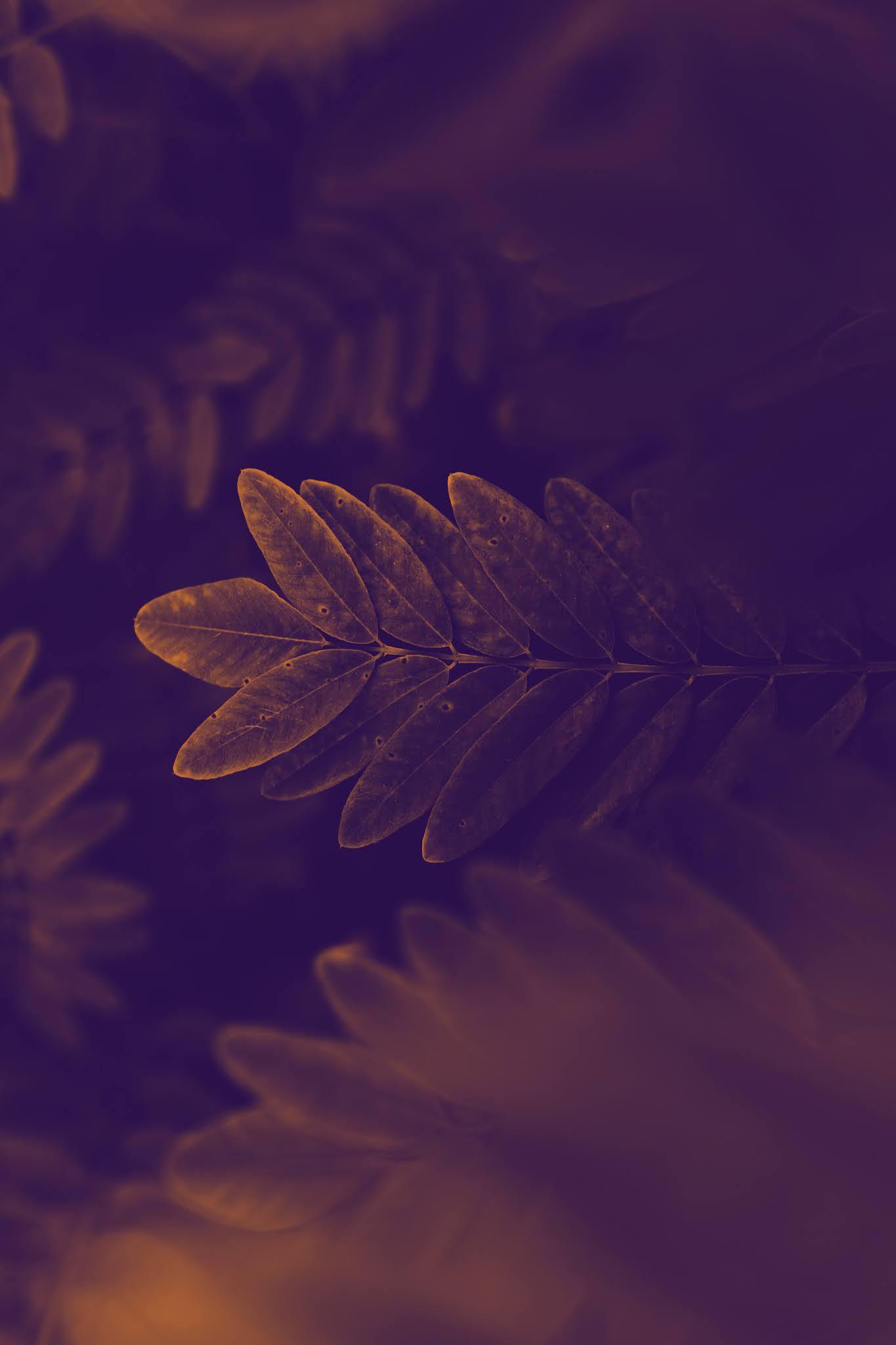 Leaves invers