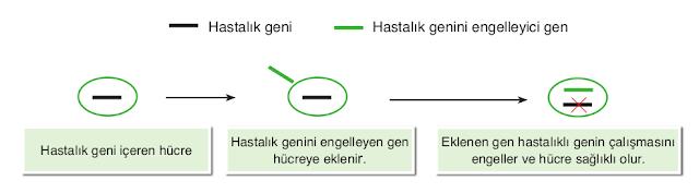 Gen Tedavisi