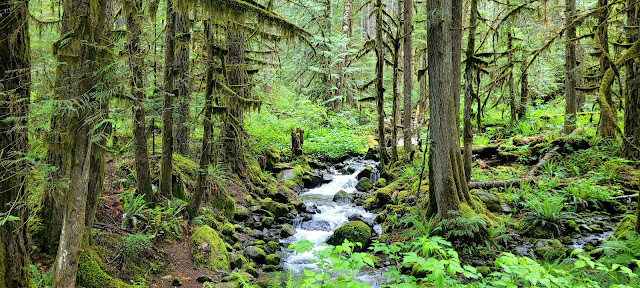 Nice Stream on the side of the road down to Nooksack Falls Parking lot