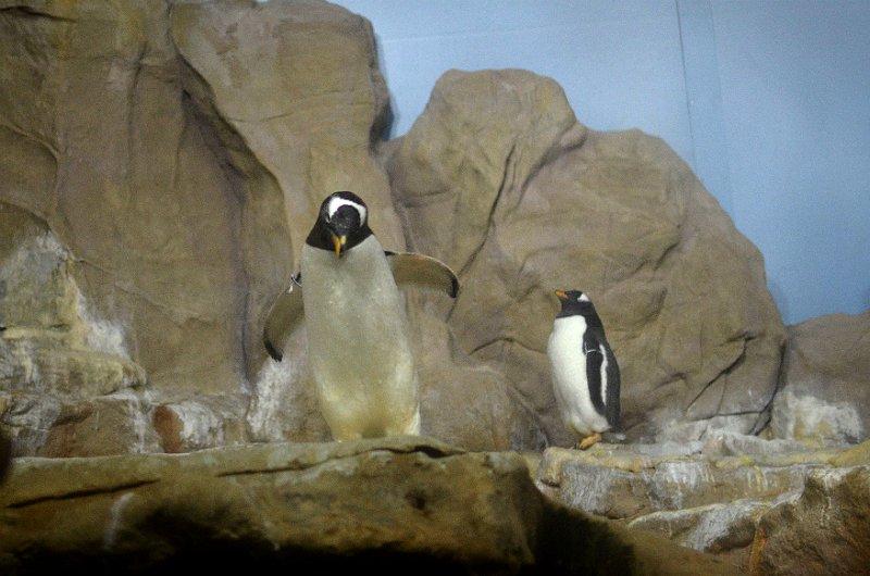 acquario village genova pinguini