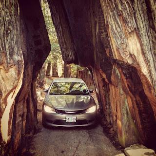 Driving through a redwood