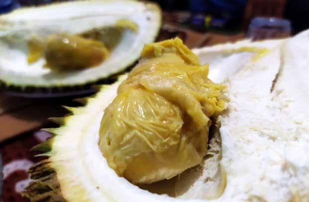 durian lumut