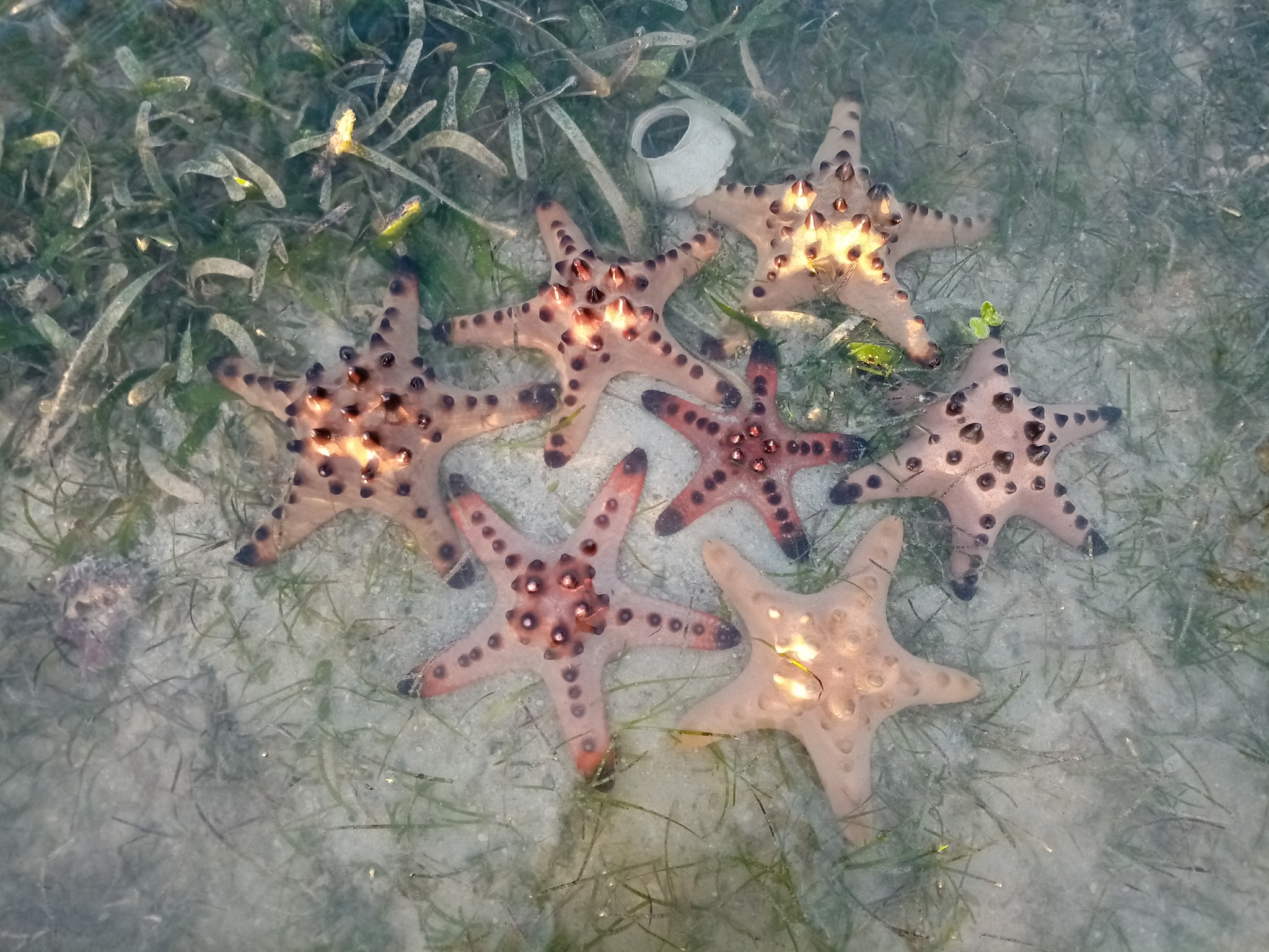 Pretty Starfish, we have so many of this kind in the Philippines.