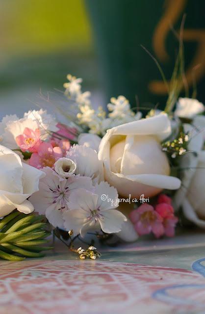 flori de gradina in bataia soarelui