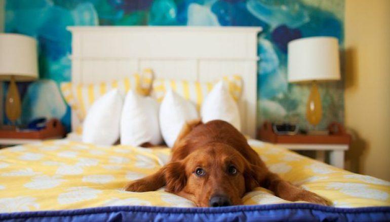 Σημάδια πως έχεις τον πιο ζηλιάρη σκύλο στον κόσμο!