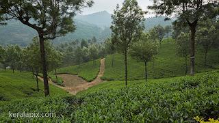 Tea estate at Valparai