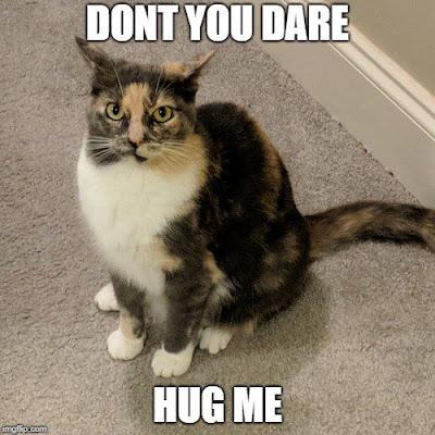Don't Hug Me Cat Meme | Lazy Daisy Felines