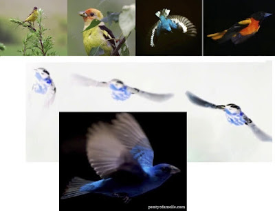 Passerines also called Songbirds represent more than half the earth's birds population. At this time, Nearly half of the birds disappeared the last 40 years.