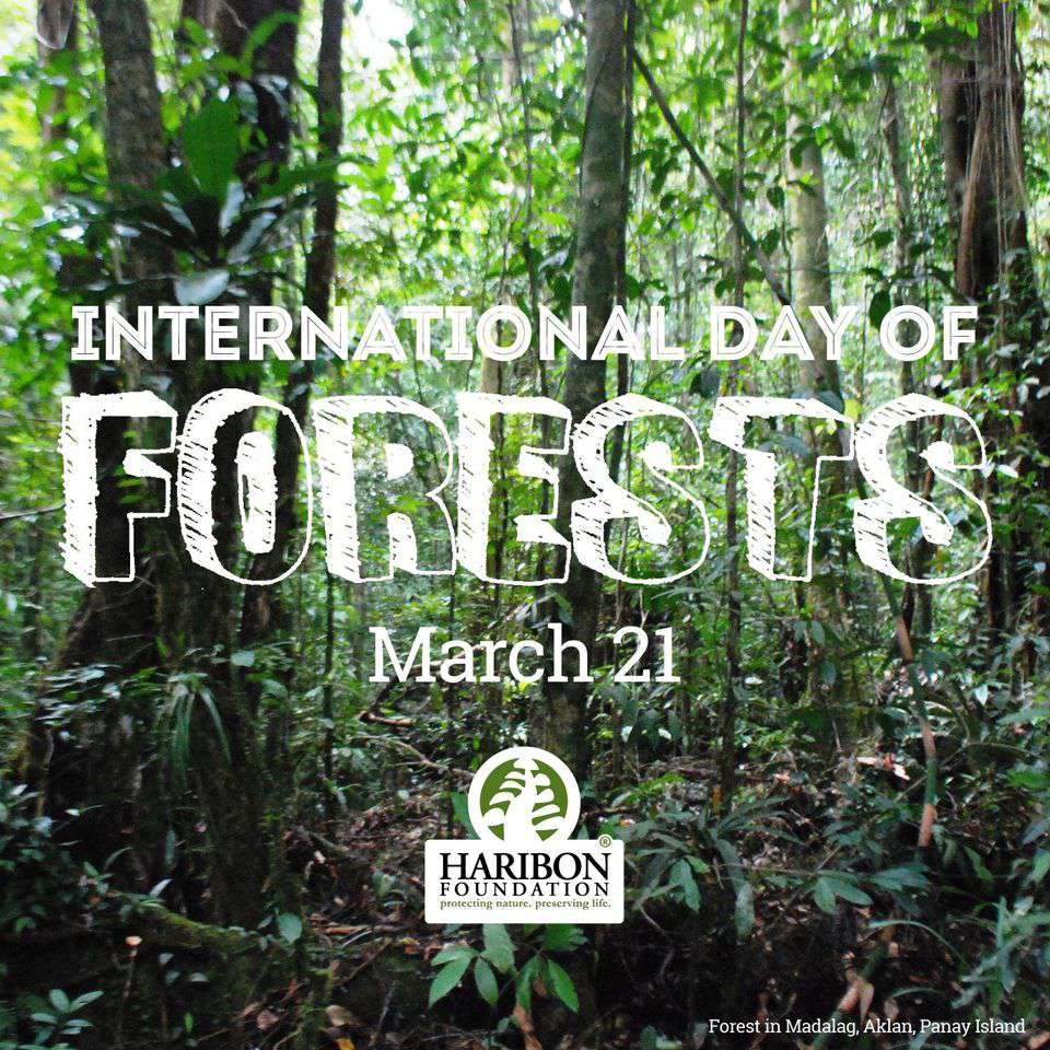International Day of Forests Wishes Photos