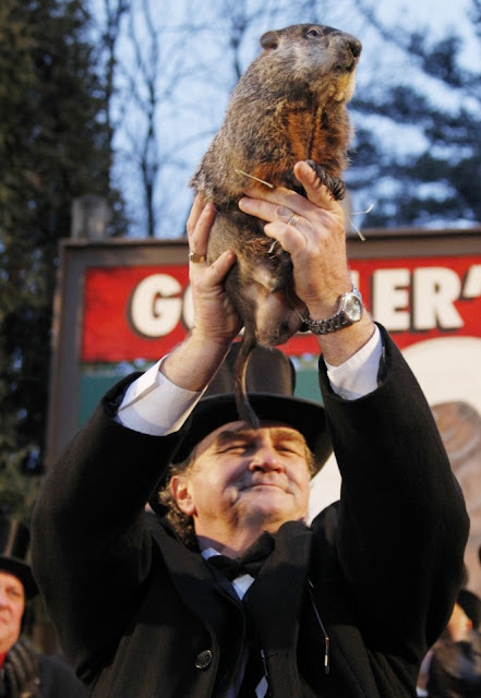 PUNXSUTAWNEY PHIL THE GROUNDHOG