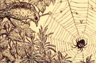 Insect wonderland