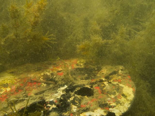 Epämääräinen, pyöreän muotoinen, ohut kappale meren pohjassa, jossa on ainakin keltsita, punaista, mustaa ja valkoista. Kappale on kulunut ja rapistunut.