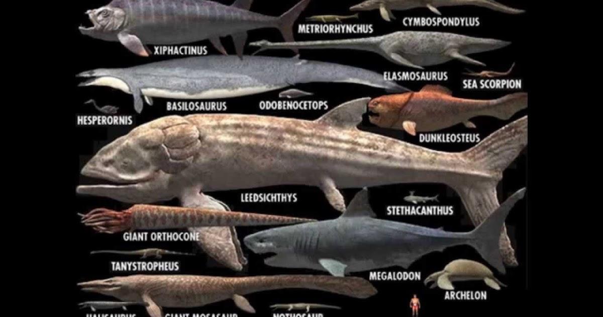 Monstruos Marinos Del Pasado I Los Grandes Peces Depredadores Los paleontólogos siempre se han sorprendido cuando encontraban nuevos dinosaurios (hay aunque se sugirió que algunos dinosaurios pudieron haber sido acuáticos, ya que, por ejemplo, su masa corporal es demasiado grande (saurópodos, por. monstruos marinos del pasado i los