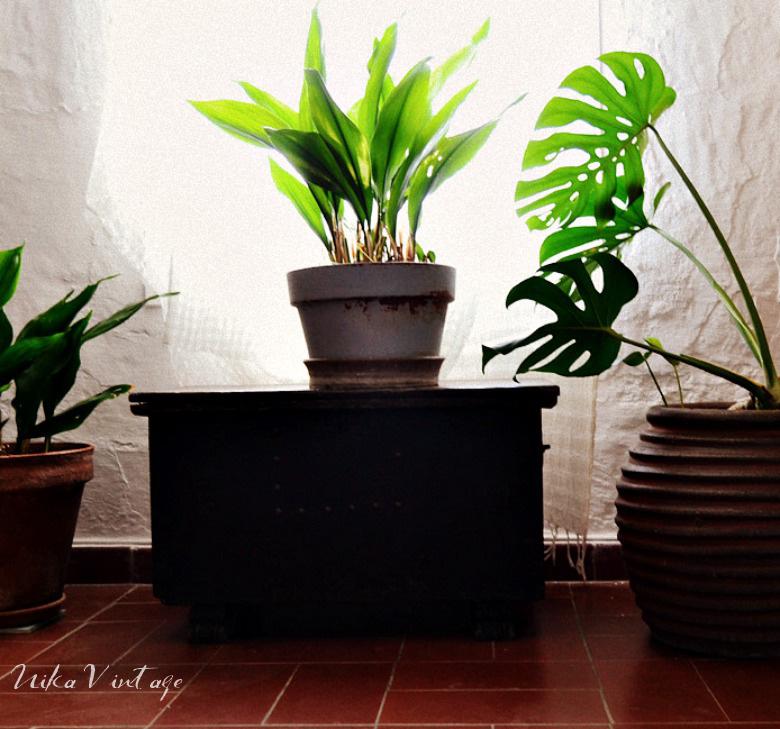 El blog se llena de plantas para hablar de la tendencia del momento el urban jungle
