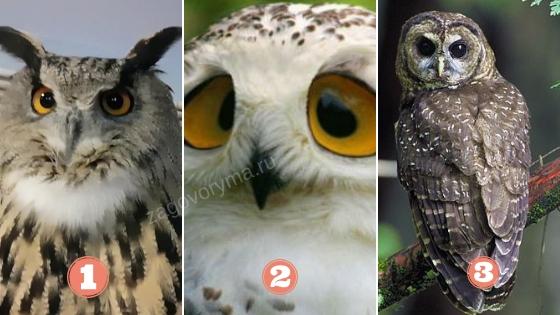 Выбранная сова имеет для вас важное предсказание. Выберете свою