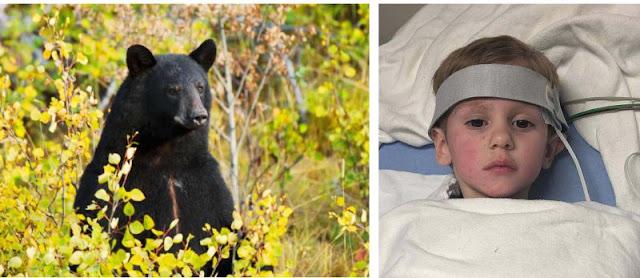 Огромный медведь бережно охранял 3-летнего мальчика, который заблудился в лесу