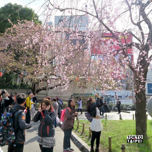 【上野恩賜公園】日本第一座公園 天皇賜予市民的賞櫻名所